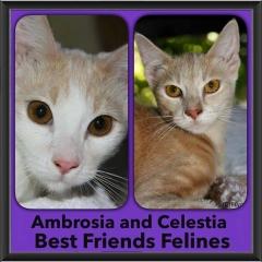 2015 - Adopted - Ambrosia and Celestia