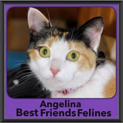 2015 - Adopted - Angeline