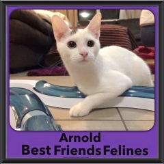 2015 - Adopted - Arnold