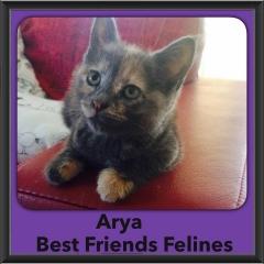 2015 - Adopted - Arya