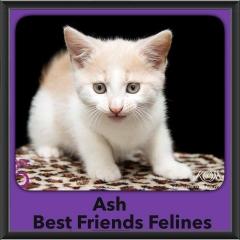 2015 - Adopted - Ash