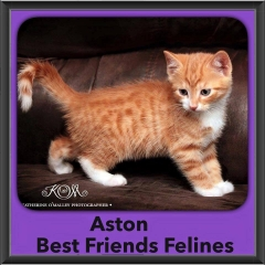 2015 - Adopted - Aston