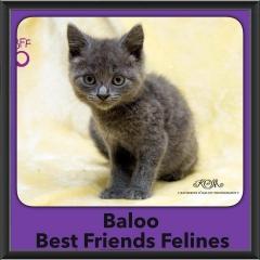 2015 - Adopted - Baloo