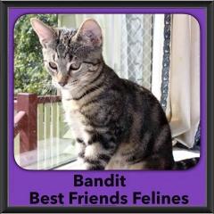 2015 - Adopted - Bandit