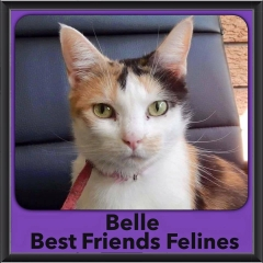 2015 - Adopted - Belle