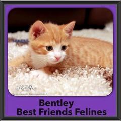 2015 - Adopted - Bentley