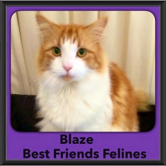 2015 - Adopted - Blaze