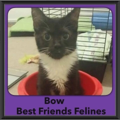 2015 - Adopted - Bow