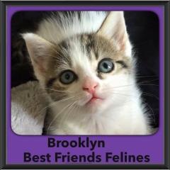 2015 - Adopted - Brooklyn