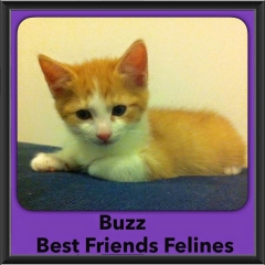2015 - Adopted - Buzz