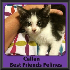 2015 - Adopted - Callen