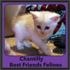 2015 - Adopted - Chantilly