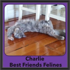 2015 - Adopted - Charlie