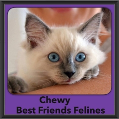 2015 - Adopted - Chewy