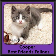 2015 - Adopted - Cooper