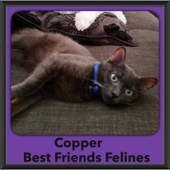 2015 - Adopted - Copper