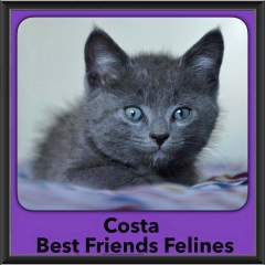 2015 - Adopted - Costa