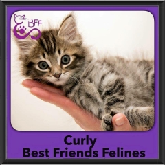 2015 - Adopted - Curly