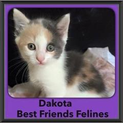 2015 - Adopted - Dakota