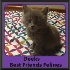 2015 - Adopted - Deeks