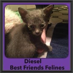 2015 - Adopted - Diesel