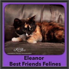 2015 - Adopted - Eleanor
