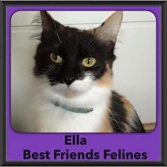 2015 - Adopted - Ella