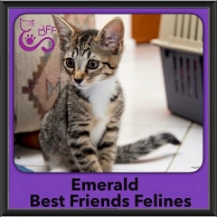 2015 - Adopted - Emerald