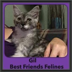 2015 - Adopted - Gil