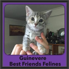 2015 - Adopted - Guinevere