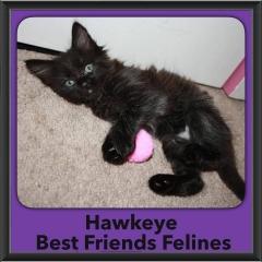 2015 - Adopted - Hawkeye