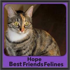 2015 - Adopted - Hope