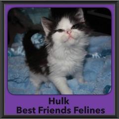 2015 - Adopted - Hulk