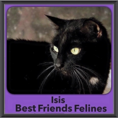 2015 - Adopted - Isis