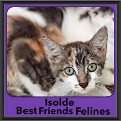 2015 - Adopted - Isolde