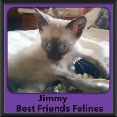 2015 - Adopted - Jimmy