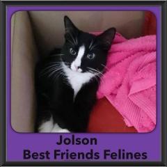 2015 - Adopted - Jolson
