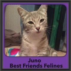 2015 - Adopted - Juno