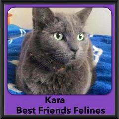 2015 - Adopted - Kara