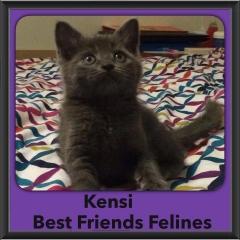 2015 - Adopted - Kensi