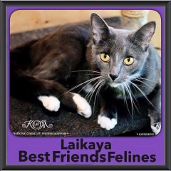 2015 - Adopted - Laikaya