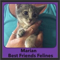 2015 - Adopted - Marian