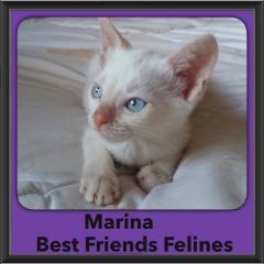 2015 - Adopted - Marina