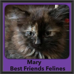 2015 - Adopted - Mary