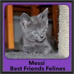 2015 - Adopted - Messi