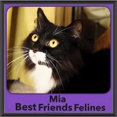 2015 - Adopted - Mia