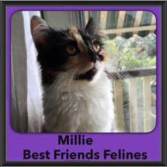 2015 - Adopted - Millie