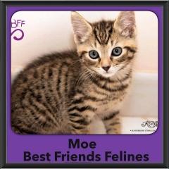 2015 - Adopted - Moe
