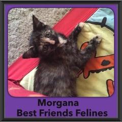 2015 - Adopted - Morgana