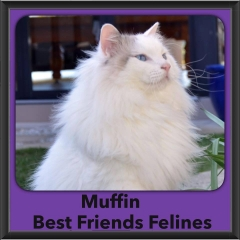 2015 - Adopted - Muffin
